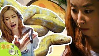 [爱丽去哪儿] 皮卡丘的原型?一起见证与世界第二长的巨大蟒蛇亲吻吧! | 爱丽和故事 EllieAndStory