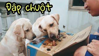 Kim Chi Củ Cải chơi trò đập chuột - Ai giỏi hơn ai | My dogs play mouse-beating game
