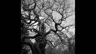 Arboreal Fractals