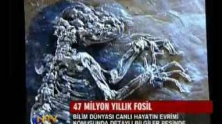 47 million year old fossil discovered in Germany