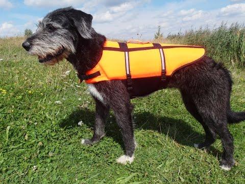 Julie testet: Schwimmwesten für Hunde