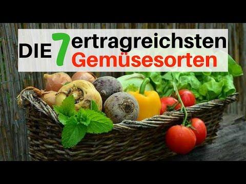 Die 7 ertragreichsten Gemüsesorten - Große Ernte für Kleingärtner und Selbstversorger