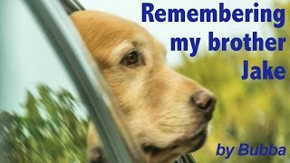 Bring tissues... A Tribute by Bubba, a Golden Retriever Dog - Pet Memorial