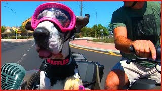 приколы собаки #13 милые щенок и пес