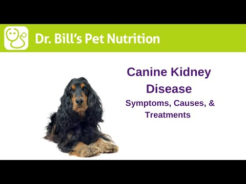 Video Kidney Disease in Dogs