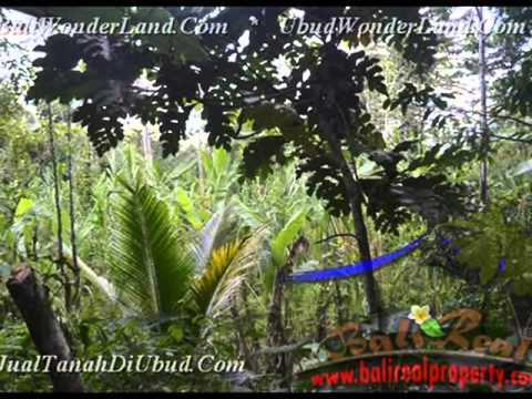 Beautiful Property 11.400 m2 Lahan  View hutan dan Tebing  di Ubud TJUB431