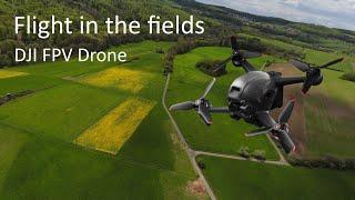Flight in the fields | DJI FPV Drone