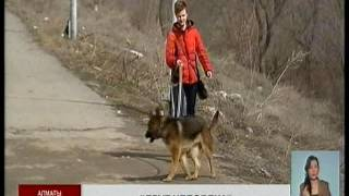 Алматинцы борются с соседями, которые держат собак