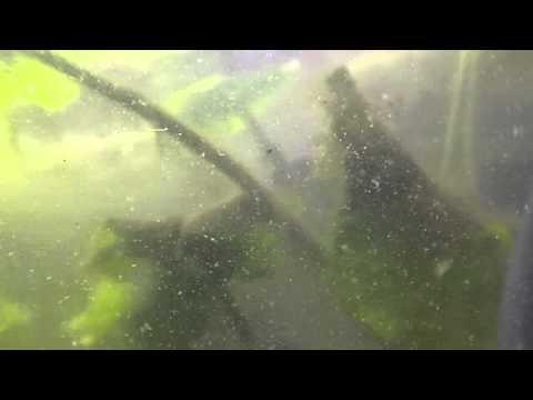 Riposi e pescando sul fiume unanguilla
