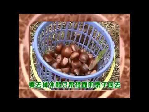 Chú Khỉ Thông Minh Phiêu Lưu Ký 32