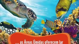 Dia de Iemanjá é também o Dia Mundial das áreas úmidas