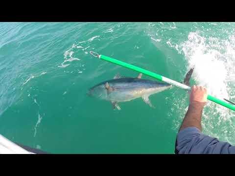 Proposta su fishings