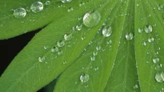 Jesse Cook   Rain(Still Echoes)