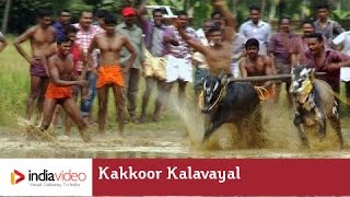 Kakkoor Kalavayal - the bull racing