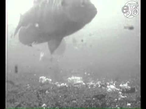 Поведение карпа у приманки подводная съёмка