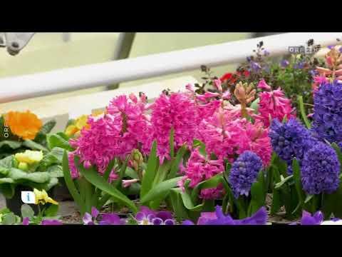 Frühling beim Gärtner