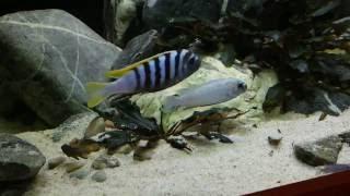 Про карантин для рыб, наш отпуск и бактериальную инфекцию