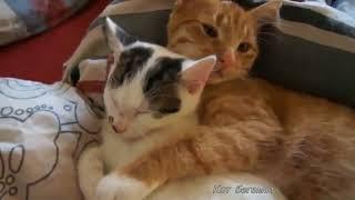 Видео приколы смешное видео с котами и кошками 2017 #2 ТОП приколы 2017 коты и ежики