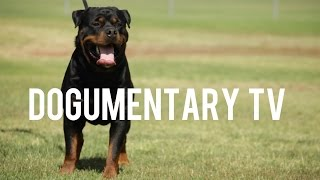 ROTTWEILERS: GERMAN SERBIAN AND AMERICAN AND OTHER THINGS OF INTEREST