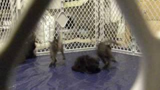 Котята на целлофане