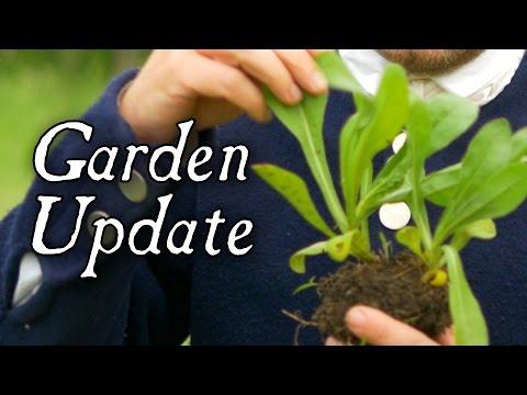 An Update On The Herb Garden
