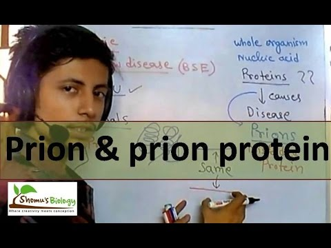 Video Prion protein and prion disease