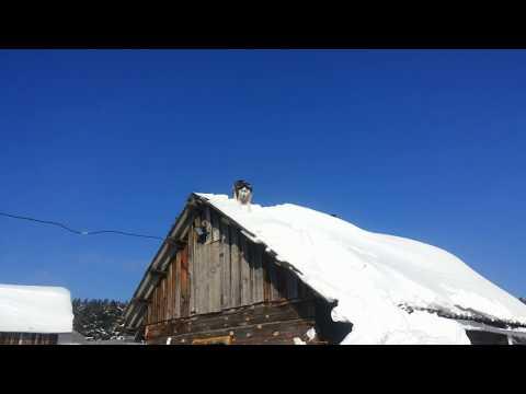 Сибирский хаски залезла на крышу.