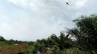 preview picture of video 'Kebakaran lahan sawit desa sungai rasau'