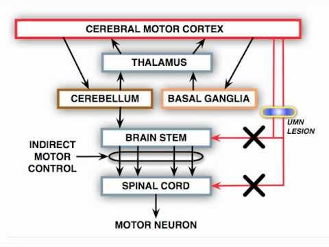 Video Anatomy Motor Exam: UMN Syndrome