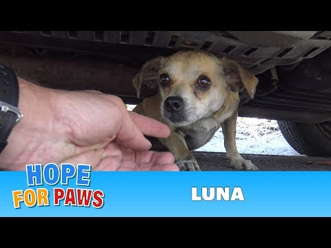 Lost Doggie Luna Gets Reunited With Owner