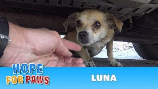 How a little microchip changed this dog's life!!!  Please share this important video.