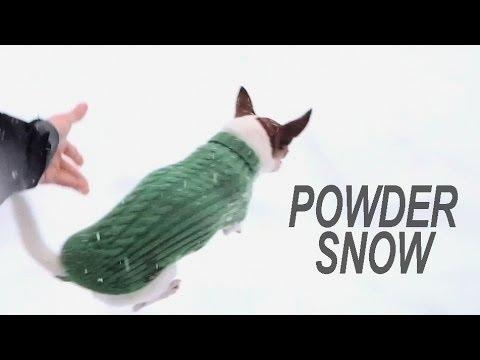 Γιατί τα τσιουάουα δεν τρέχουν στο χιόνι;