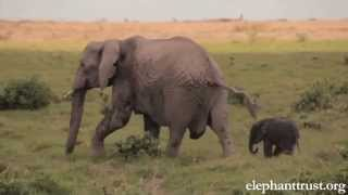 Elephant Baby-Mother Love Will Make U Cry