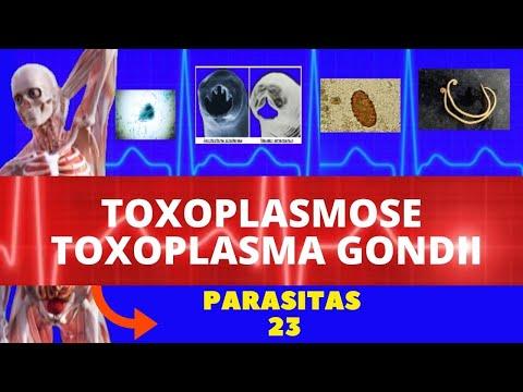 Paraziti macrou