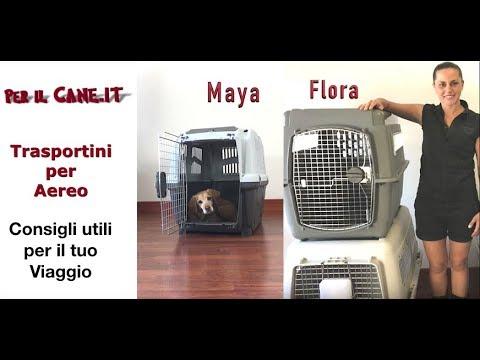 Trasportini per Cani IATA per Aereo. Consigli Utili da PERILCANE.IT