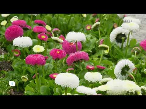 Grabbepflanzung im Frühjahr