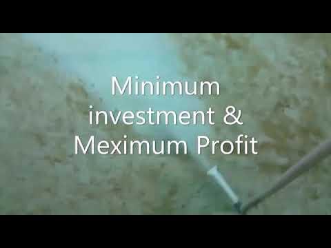 Natural Recirculating Aquaculture System
