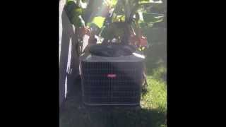 BELLE AIR INC AIR CONDITIONING & HEATING SERVICES! (407)410-7296