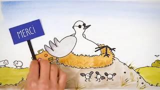Déconfinement sur le littoral : ATTENTION aux oiseaux !