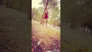 EL ÚLTIMO SUPERVIVIENTE (bosques de Gufruchiquistan)