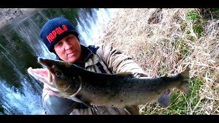 Ловля лосося в эстонии
