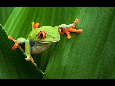 Download Virtual Field Trip Amazon Rainforest Mp4 HD Video and MP3