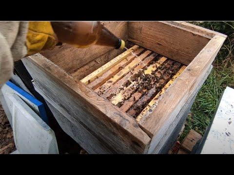 Пчеловодство.Контрольная ревизия перед заморозками. Заключительная обработка щавельной кислотой пчёл