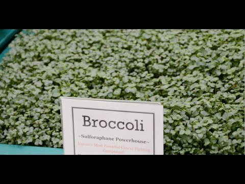 LI Microgreens, at Stony Brook Medicine