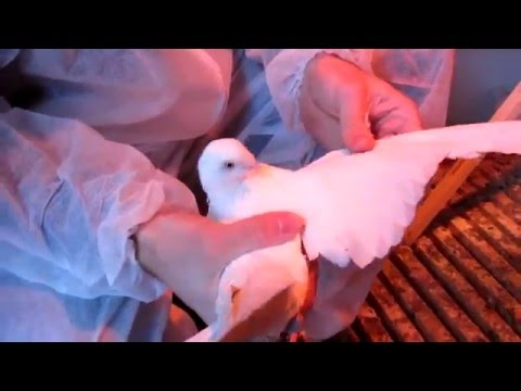 Лечение от гельминтов на коже