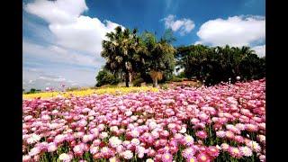 The Australian Botanic Garden, Sydney