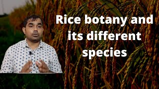 Rice botany and its different species