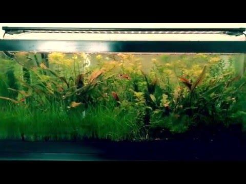 Finnex Planted Plus 24/7 LED light (review)