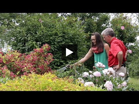 Gardening – Easy Watering Tips For Your Lawn & Garden