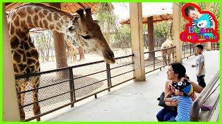 น้องบีม | ยีราฟคอยาว เที่ยวบึงฉวากสุพรรณบุรี Zoo